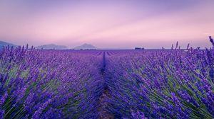 Превью обои лаванда, поле, цветы, цветение, горизонт, даль