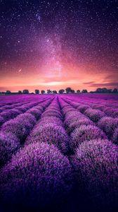 Превью обои лаванда, поле, звездное небо, горизонт