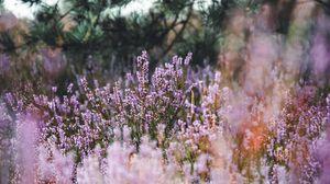 Превью обои лаванда, трава, поле, полевые цветы