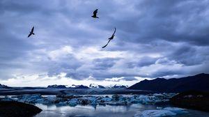Превью обои ледник, лед, озеро, птицы, пейзаж