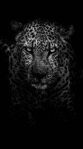 Превью обои леопард, хищник, морда, чб