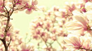 Превью обои лепестки, цветок, светлый