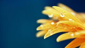 Превью обои лепестки, капли, макро, цветок, мокрый, желтый