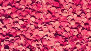 Превью обои лепестки, роза, красный, текстура