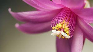 Превью обои лепестки, тычинки, цветок
