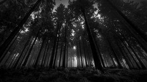 Превью обои лес, черно-белые, снизу, деревья, мрачные, кроны, туман, молчание