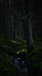 Превью обои лес, деревья, мох, холмы, природа, зеленый