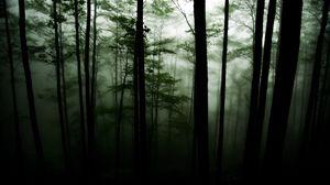 Превью обои лес, деревья, мрак, туман