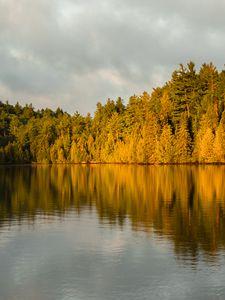 Превью обои лес, деревья, озеро, сумерки, пейзаж