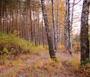 Превью обои лес, деревья, природа, осень, пейзаж