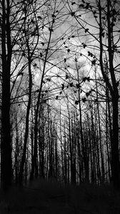 Превью обои лес, деревья, силуэты, черно-белый, черный