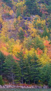 Превью обои лес, деревья, склон, осень, разноцветный