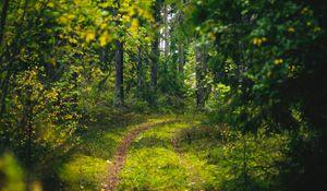 Превью обои лес, деревья, тропинка, зеленый, природа, пейзаж