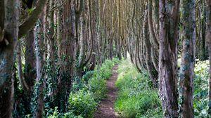 Превью обои лес, деревья, тропинка, трава, пейзаж