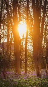 Превью обои лес, деревья, цветы, солнце, свет, природа