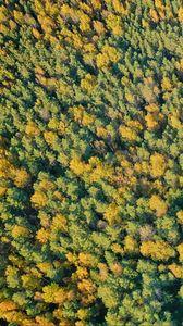 Превью обои лес, деревья, зеленый, природа, вид сверху