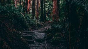 Превью обои лес, джунгли, тропинка, деревья, папоротник, тропики