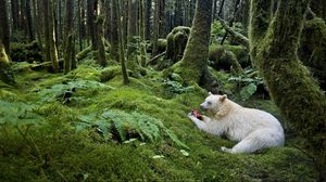 Превью обои лес, мишка, трапеза, альбинос