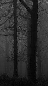 Превью обои лес, туман, чб, деревья, темный