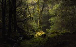 Превью обои лес, туман, деревья, ветки, мох
