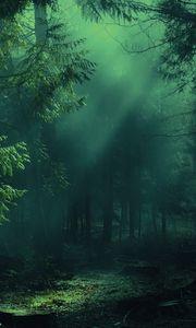 Превью обои лес, туман, деревья, тени, свет