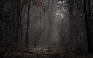 Превью обои лес, туман, деревья, ветки, осень