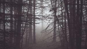 Превью обои лес, туман, мрак, деревья