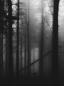 Превью обои лес, туман, олень, чб, мрачный
