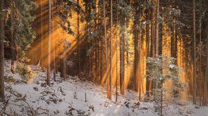 Превью обои лес, зима, деревья, солнечный свет