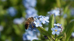 Превью обои лето, цветы, пчела
