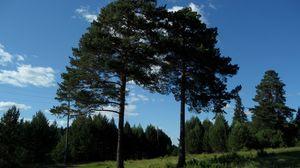 Превью обои лето, деревья, трава, лес