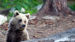 Превью обои лето, удивление, лес, мишка, медведь