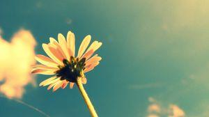 Превью обои лето, время года, цветок, растение, небо, облака, летнее время