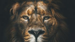 Превью обои лев, морда, грива, взгляд, хищник