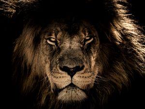 Превью обои лев, морда, грива, хищник, взгляд