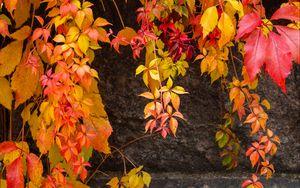 Превью обои лианы, листья, камень, осень