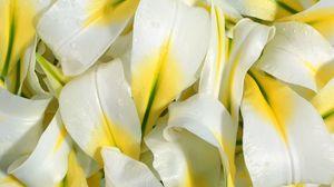 Превью обои лилии, лепестки, белые, капли