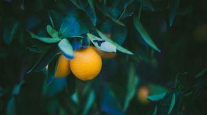 Превью обои лимон, фрукт, ветка, листья