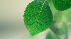 Превью обои лист, фон, зеленый, макро