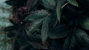 Превью обои лист, капли, растение, темный, влажный