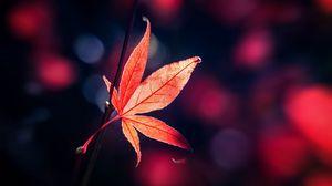 Превью обои лист, красный, блики, размытость