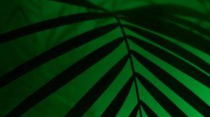 Превью обои лист, неон, пальма, свет, темный