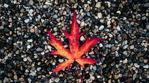 Превью обои лист, осень, камни, опавший