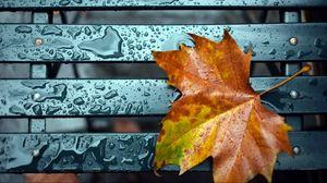 Превью обои лист, осень, капли