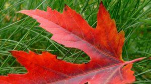 Превью обои лист, осень, клен, сухой, опавший