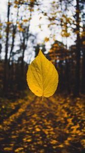Превью обои лист, осень, левитация, размытость, желтый