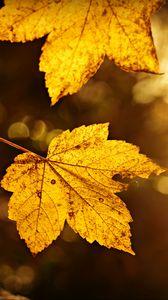 Превью обои лист, осень, ветка, размытость