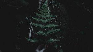 Превью обои лист, ветка, темный