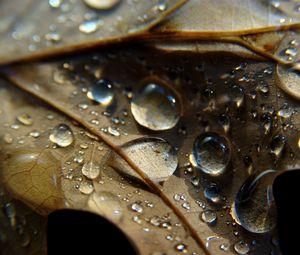 Превью обои лист, жилки, капли, мокрый, макро