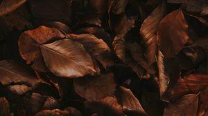 Превью обои листья, коричневый, сухой, осень, листва